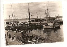 Bateaux De Pêche Douarnenez Nouvelle Criée - REMA N°2486 - Douarnenez