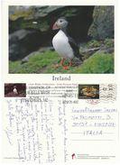 CARTOLINA IRLANDA 2013 UCCELLO ANNULLO SPECIALE (VP554 - 1949-... Repubblica D'Irlanda