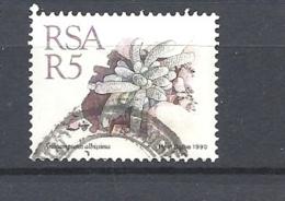 SUD AFRICA            1990 Succulents USED    Anacampseros Albissima - Usati