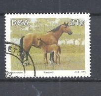 SUD AFRICA        1991 Animal Breeding In South Africa   USED        Equus Caballus - Usati