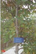 India Picture Post Card, Sundari Heritiera Fomes, Sundarban, National Park,UNESCO World Heritage Site,By India Post - Giftige Pflanzen