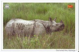 UNESCO World Heritage Site ,One Horned Rhino, Kaziranga National Park, India Post