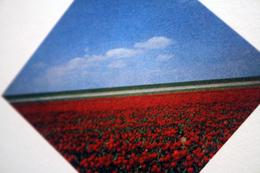 Ger Dekkers - Bulb-fields, Noordpolder, Holland - Steendruk