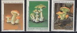 1985. Benin.  Mushrooms.