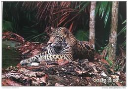 Lote PEP839, Costa Rica, Postal, Postcard, Fauna, Jaguar, Panthera Onca - Costa Rica