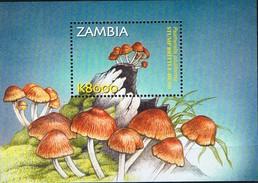 ZAMBIE - Champignons - Psathyrella Piluliformis
