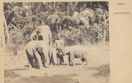 CEYLON - Eléphants - Postcard UPU - Edition Platé & Co. - Sri Lanka (Ceylon)