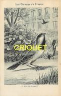 Format Carte Postale, Bon Point Collection Charrier, Les Oiseaux De France, Le Rouge-gorge, Descriptif Au Verso - Vieux Papiers