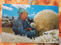 Mongolia. Darhadyn Wetland, Woman Milking An Ewe, Traditional Costume - Modern Postcard - Mongolië