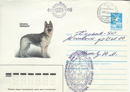 Dog On Russian Stationery.   H-1017
