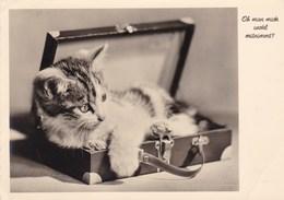 CHAT Dans La Valise - Katten