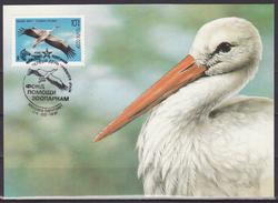 Russia USSR 1991 MC Fauna Zebra White Stork Birds Bird