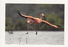 Pws Bonaire Flamingo