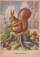 Leckermäulchen Eichhörnchen Eule Pilz -e Signiert R. Engelhardt