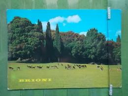 6 Postcard BRIONI CROATIA - KOV 1036 - Cartoline