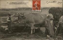44 - LA BERNERIE-EN-RETZ - Récolte Goemon - La Bernerie-en-Retz