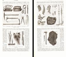 """RECOLTE Et PREPARATION """" DES PLANTES POUR COLLECTIONS """"  1889 - Jardinage"""