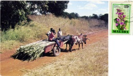 MALAWI  Rural Scene  Nice Stamp - Malawi