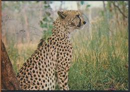 °°° 1171 - ZAMBIA - CHEETAH , SOUTH LUANGWA NATIONAL PARK - 1984 With Stamps °°° - Zambia