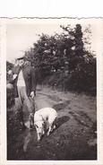 26145 Photo Ouverture De La Chasse -1936 -Rennes 35 -chien