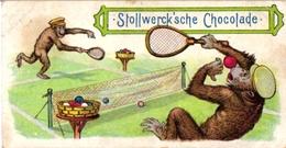 4 CardsTennis Pub   Hoyer Rostock Stollwerck Chocolade DRessed Apes  La Teinture Alsacienne Cats Playing TENNIS Gartmann - Trading Cards