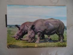 CPM FORMAT ACTUEL  -  AFRICAN WILD - Rhinocéros