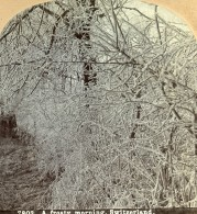 Suisse Matin D'Hiver Gelee A Frosty Morning Ancienne Photo Stereo CH Graves 1880 - Stereoscopic