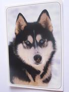CHIEN HUSKY DE SIBERIE EDIT CELLARD COULEUR GLACEE - Hunde