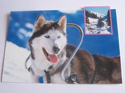 CHIEN HUSKY COULEUR GLACEE PHOTO C BAILE OLIVIER ANGER EDIT SMD - Hunde