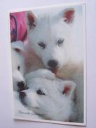 CHIEN HUSKY COULEUR GLACEE  BERNARD GRANGE - Hunde