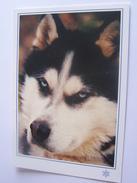 CHIEN HUSKY  COULEUR GLACEE EDIT CELLARD - Hunde