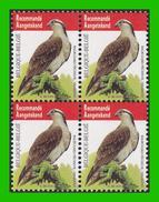 BUZIN - 4090** Balbuzard Pêcheur / Visarend - TRU - WIT PAPIER BLANC !!! - 1985-.. Pájaros (Buzin)