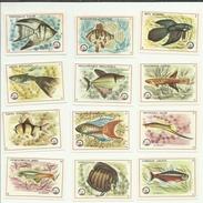 FISH POISSONS FISCHE VISSEN AQUARIUM  Former Yugoslavian Old Matchbox Labels Dolac - Luciferdozen - Etiketten