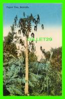 BERMUDA - PAPAW TREE -  PUB. BY THE YANKEE STORE & BERMUDA DRUG CO - - Bermudes