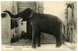 13 : MARSEILLE - MUSEUM D'HISTOIRE NATURELLE - L'ELEPHANT - Museums