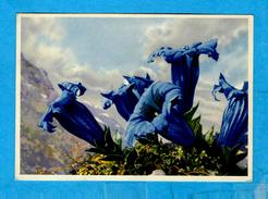 ** ENZIAN ** Kunstbildpostkarte Nach Einem Entwurf Von Paul LÖFFLER   -   Verlag : BUNKOWSKI Ehrard - Dresden  N° M/1293 - Loeffler
