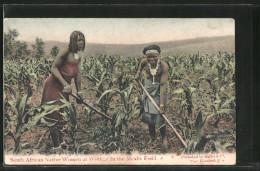 AK South African Native Women At Work In The Mealie Field, Südafrikanerinnen Bei Feldarbeit - Unclassified