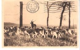 Forêt De Villers-Cotterêts (Aisne)-1939-Equipage Menier-Chasse à Courre-Hallali Du Cerf-Meute De Chiens - Villers Cotterets