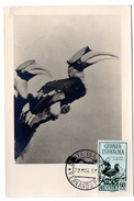 OISEAU /  CALAOS =  GUINEE ESPAGNOLE 1952  N° 341  = CARTE MAXIMUM - Perroquets & Tropicaux