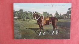 Queen Schultz  Quick Delivery Service  =ref 2505 - Pferde