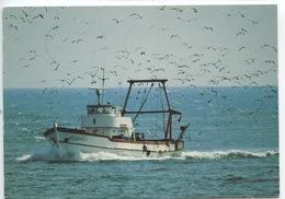 """ST 310823 Bateau De Pêche De Sète """"La Pêche A Du être Bonne""""  (ed SL) - Fishing"""
