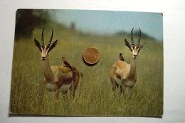 Animaux - Guepier Et Gazelle De Grant - Photo Christian Zuber - W.W.F - World Wildlife Fund - Autres