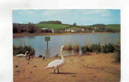Postcard - Swans & Ducks At Slapton Ley, Torcross Devon - Very Good Unused - Postcards