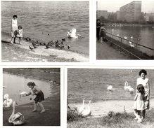 Lot De 4 Photos Oiseaux - Mère Et Fille Nourrissant Des Cygnes Et Des Pigeons Sur Un Lac à Identifier - Anonymous Persons