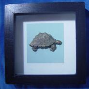 Framed Turtle - Asian Art