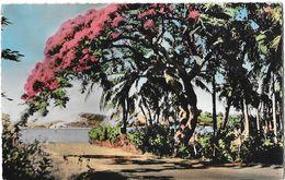 Nouvelle Calédonie - Nouméa - La Corniche (Flamboyant) - Carte Gipsy Colorisée - Nouvelle-Calédonie