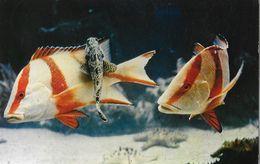 Nouvelle Calédonie - L'Aquarium De Nouméa - Lot De 3 CPSM Catala (coraux, Poissons, Anémone) - Nuova Caledonia