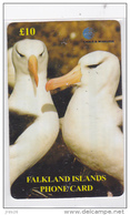Falkland  - - -  Albatross Birds