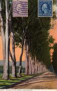 Eucalyptus Drive. - Etats-Unis