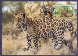Amerika - Belize - 1983 - **  WWF - Official Maximum Card ** Jaguar - First Day Of Issue 09 Dec 83 - Belize